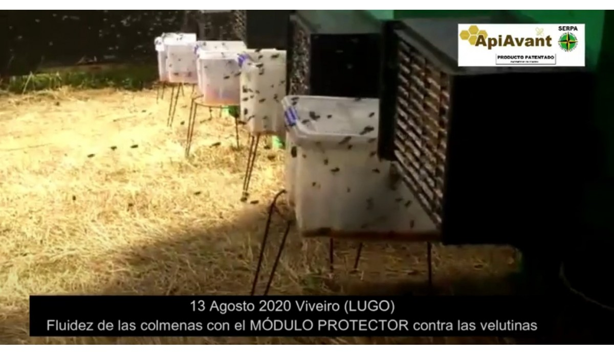 Video of the fluidity of the hives with the Anti-Level Protective Module installed