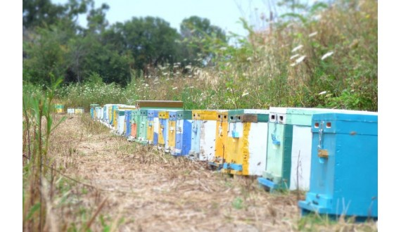 Beehive theft: How to avoid it