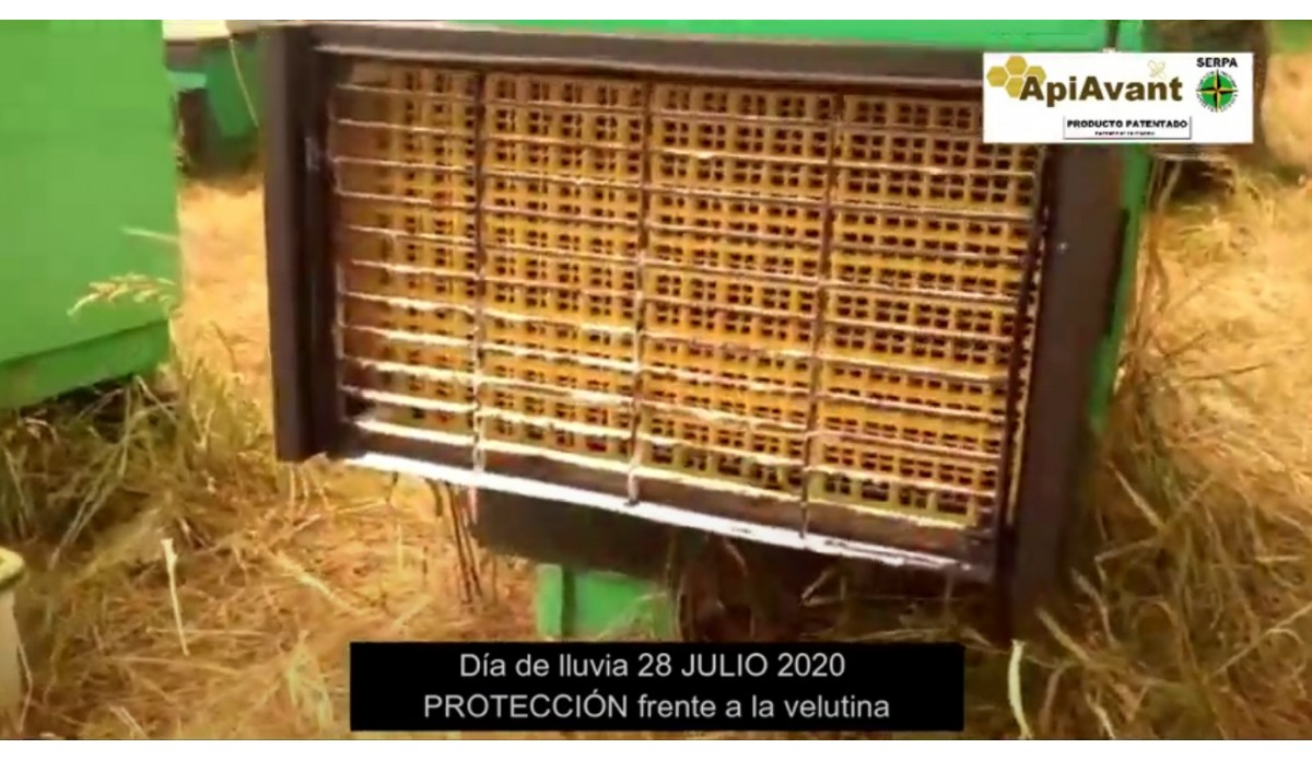 Protection of hives in a rainy day July 20, 2020